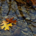leaves-in-a-stream