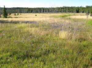 12 field of flowers