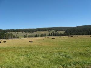 14 where the baffalo roam